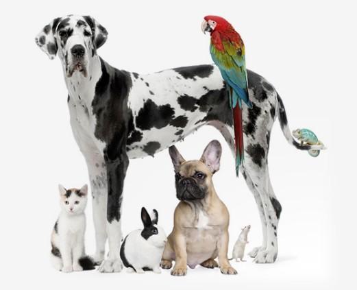 Redes sociales de perros, gatos y otras mascotas